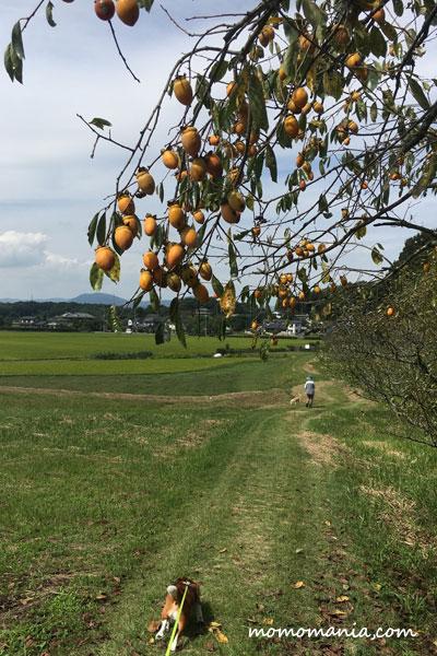 秋の吉備路サンポ