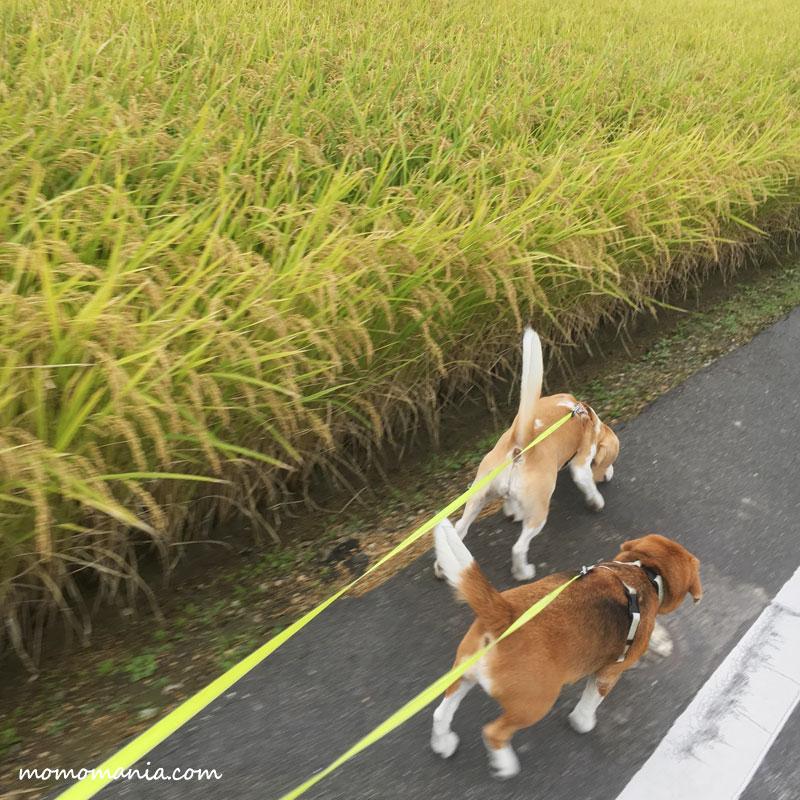 秋色の散歩