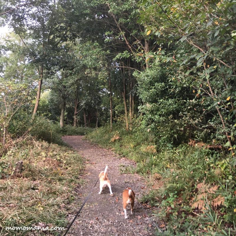 森散歩補給